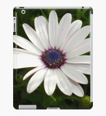 Beautiful Osteospermum White Daisy With Purple Center  iPad Case/Skin