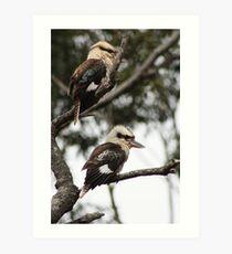 Kookaburras Art Print