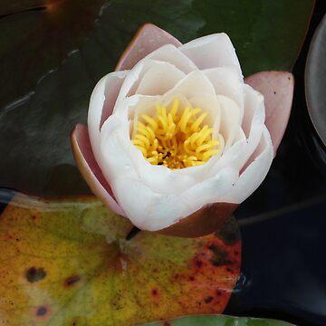 Flower in Water by Dani3ll3