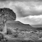 NAMAQUA, QUIVER TREE LANDSCAPE by Magriet Meintjes