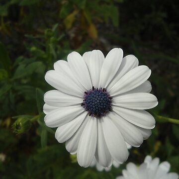 Flower by Dani3ll3