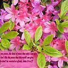 PINK PEACE    BIBLE TEXT/BESPOKE TEXT/BLANK TEXT by Shoshonan