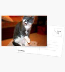 Chuckles © Vicki Ferrari Photography Postcards