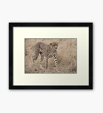 Cheetah in the Wild Framed Print