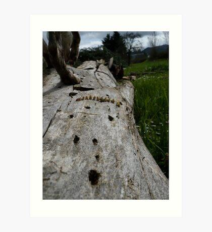 Used Log Art Print