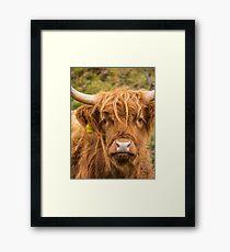 Cheeky Highland Cow Framed Print
