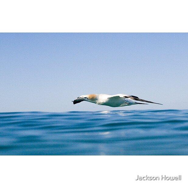 Bird In Flight by Jackson Howell
