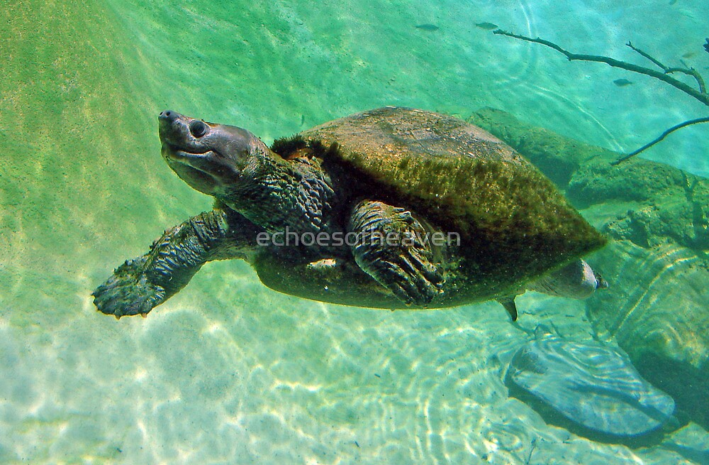 """""""Pig-nosed Turtle """"  by Carter L. Shepard by echoesofheaven"""