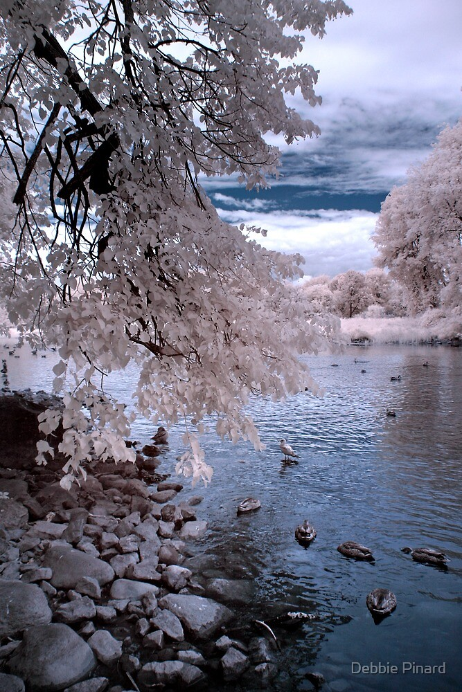 Ducks on the Rideau - Ottawa Ontario Infrared by Debbie Pinard