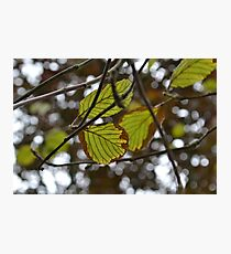 Leaves, have to love them! Photographic Print