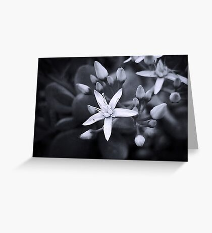 Daydream Greeting Card