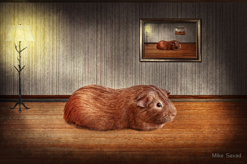 Animal - The guinea pig by Michael Savad
