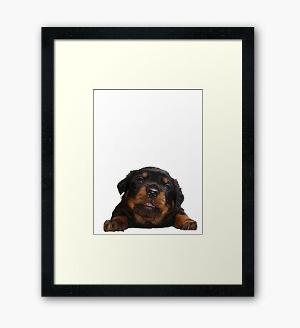 Cute Rottweiler With Tongue Out Isolated Framed Print