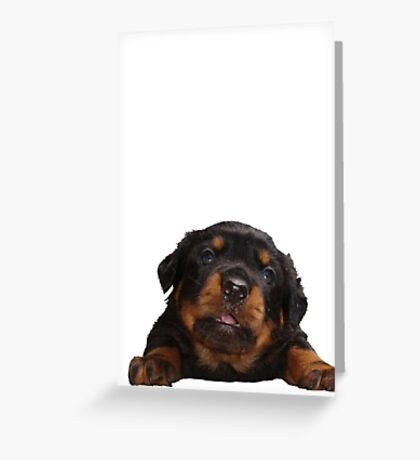 Cute Rottweiler With Tongue Out Isolated Greeting Card