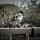 A Visit on the Verandah by -aimslo-