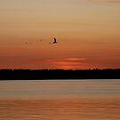 Sunset with Birds by Deborah Singer