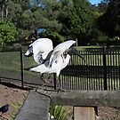 An Ibis and His Kung Fu Crane by -aimslo-