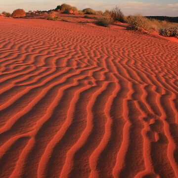 Sands of the Simpson Desert by timoss