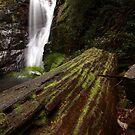 old tree, mathinna falls. northeast tasmania, australia by tim buckley   bodhiimages