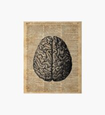 Vintage Human Anatomy Brain Illustration Dictionary Book Page Art Art Board