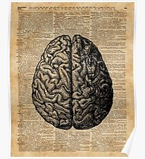 Vintage Human Anatomy Brain Illustration Dictionary Book Page Art Poster