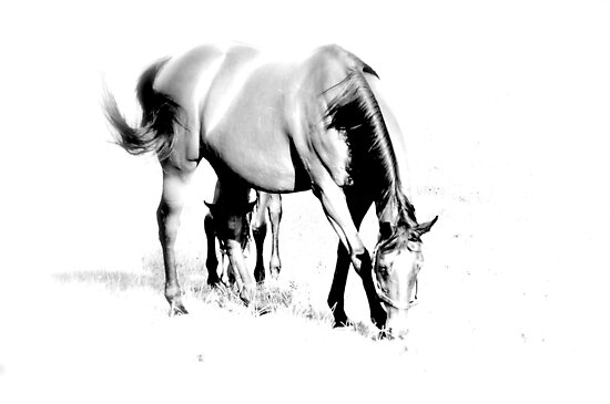 Horse B by Dominique MEYNIER