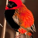 Red Bishop by Anton Alberts