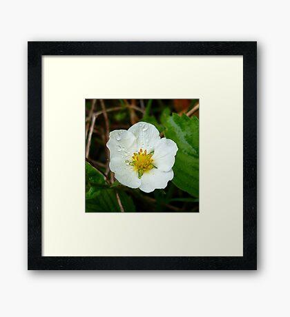 Strawberry Flower Framed Print