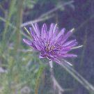 Purple by Jess Meacham
