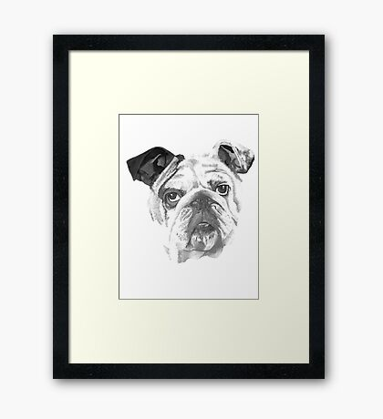 Portrait Of An American Bulldog In Black and White  Framed Print