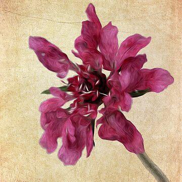Flower Oil Paint by TimeScape