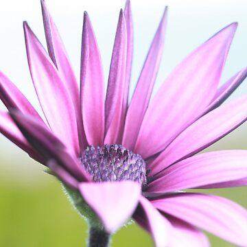 Purple Flower by TimeScape