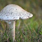 Mushroom Umbrella by Poete100