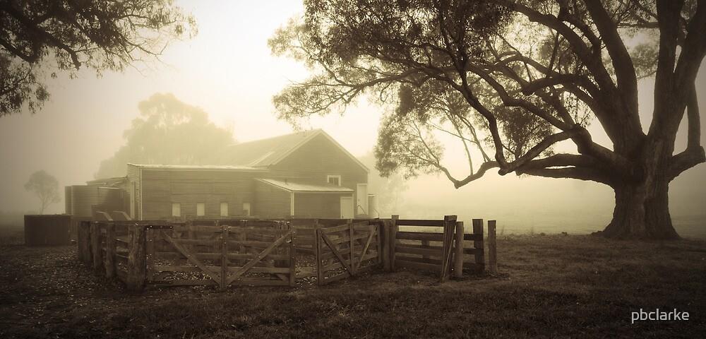 Misty Sheep Yard by pbclarke