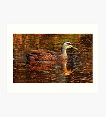 Two ducks Art Print