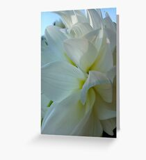 Dahlia. by Brown Sugar.  Floral iPad series. You are a gift if you like ! Greeting Card