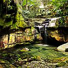 Moss Garden, Carnarvon Gorge, Queensland by JuliaKHarwood