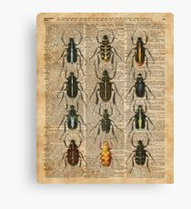 Beetles & Bugs,Insect Chart,Biological Illustration on Vintage Dictionary Book Page Background Canvas Print