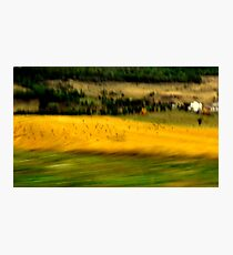 Crows In Yellow Field Photographic Print