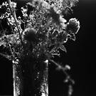 2012 - wiesenblumen by Ursa Vogel