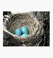 Robins Egg Blue Photographic Print