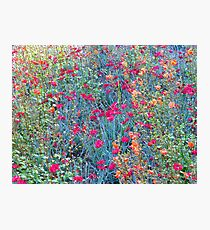 Delicate Tapestry Of Colour #3 Photographic Print