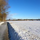 Winter road by João Figueiredo