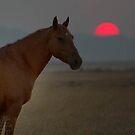 Smoky Sunset / West Desert Utah by Robbie Knight