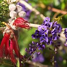 Hovea and Calothamnus by kalaryder