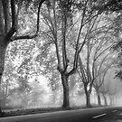 Along a Misty Lane by Mieke Boynton