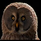 Grey Owl by JMChown