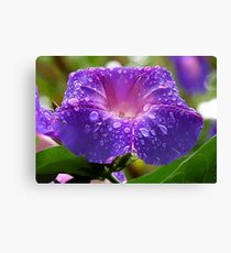 Morning Glory Petals and Dew Drops Vector Canvas Print
