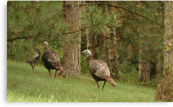 Holy Hill Turkeys by Thomas Murphy