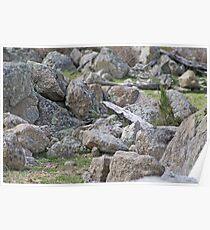 Granite, granite everywhere! Poster
